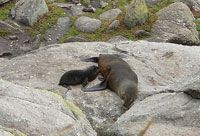 Seals at Tauranga Bay