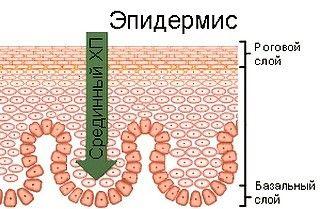 Срединный химический пилинг – это гораздо более сложная процедура, чем поверхностный ХП. Повреждаются практически все слои эпидермиса, по сути это ожог второй степени.  После такого пилинга потребуется неделя домашнего режима, потому что в течение семи дней лицо будет отечным, красным, сильно шелушащимся. Проводят срединный пилинг с целью повысить эластичность кожи, избавиться от морщин, рубцов, растяжек, пигментных пятен, для лечения плоских бородавок. Эффект после процедуры держится…