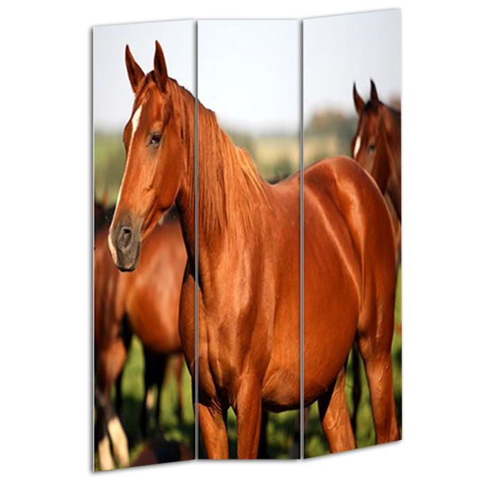 Teen Room Divider Girl Horse Screen 3 Panel 2 sided Images 72 x 48 Cute Country #TeenRoomDivider #Country