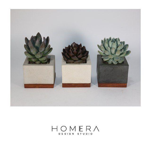 HOMERA Design Studio • OFELIA •  mecetas de concreto negro, gris y blanco, tratadas al acido y pie de madera de Cancharana.  @homera_dstudio #HomeraDesignStudio #MacetaOfelia #DesignStudio #ConcreteDesign #Gdl #Interiorism #Architecture #suculents #share #like #thinkGlocal