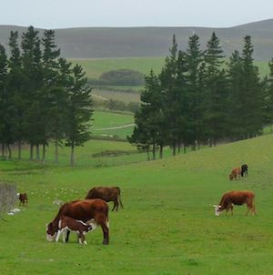 Hermanuspietersfontein Farm