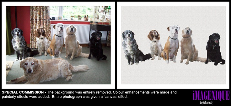 SPECIAL COMMISSION - The background was entirely removed. Colour enhancements were made and   painterly effects were added.  Entire photograph was given a 'canvas' effect.