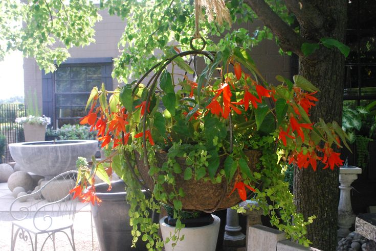 hanging pots - Google Search