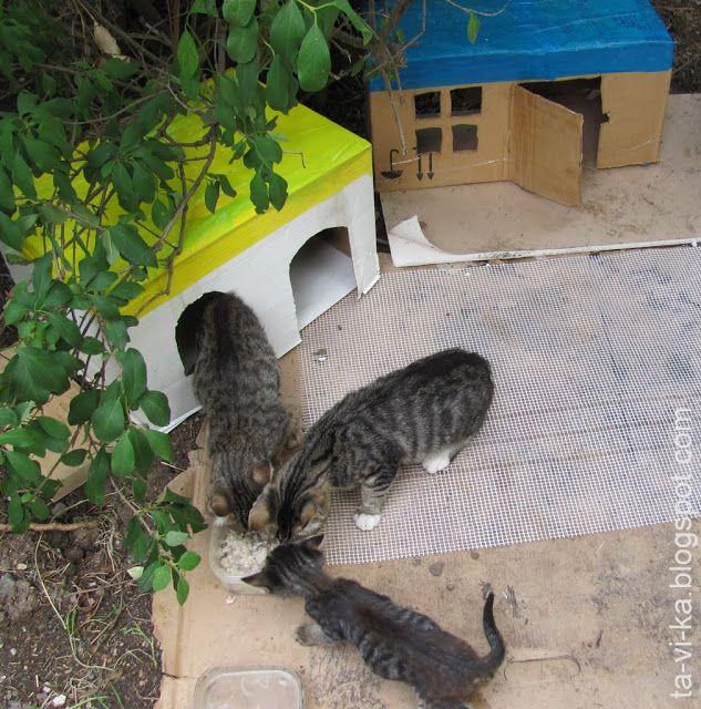 шефство над котятами