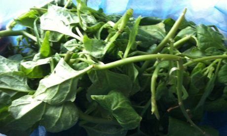 Bush food: warrigal greens. Warrigal green and desert lime pesto with wholemeal pasta