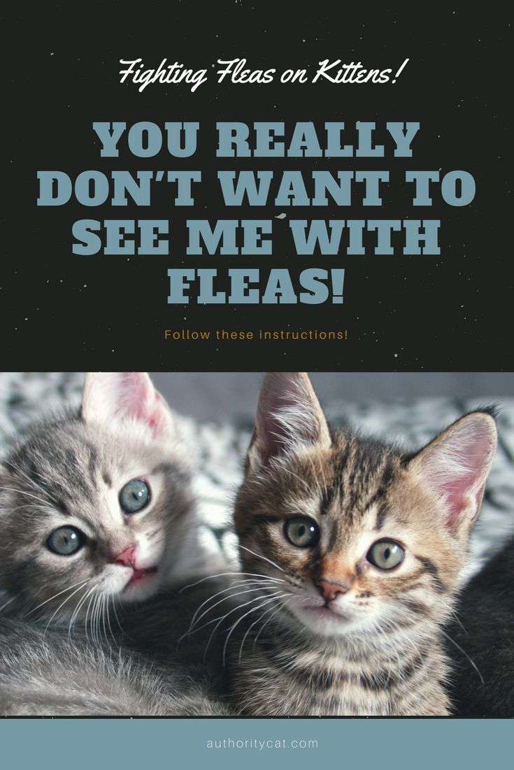 This Is All You Need To Know About The Best Flea Treatment For Kittens Flea Treatment For Kittens Fleas On Kittens Fleas