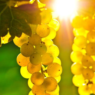 Cut grapes in half and rub over clean skin. Chill them and use around the eyes to reduce fluids.