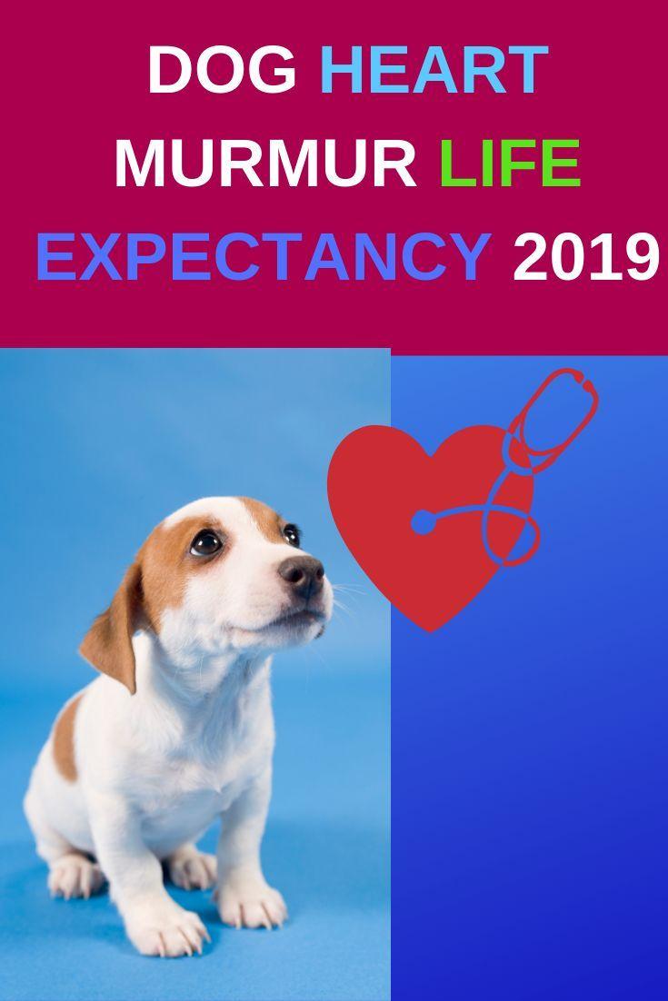 Dog Heart Murmur Life Expectancy Guide Heart Murmur Heart