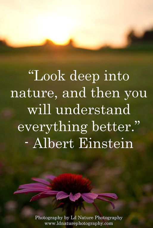 Best Nature  Photography Quotes Images On   Nature
