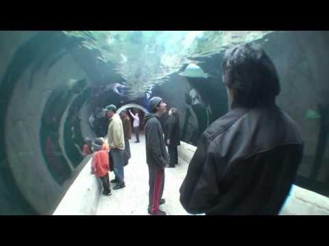 Dallas World Aquarium 2010                              …