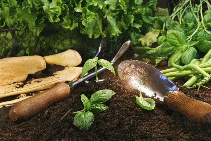 Lekovite biljke koje možete uzgojiti u vašem domu