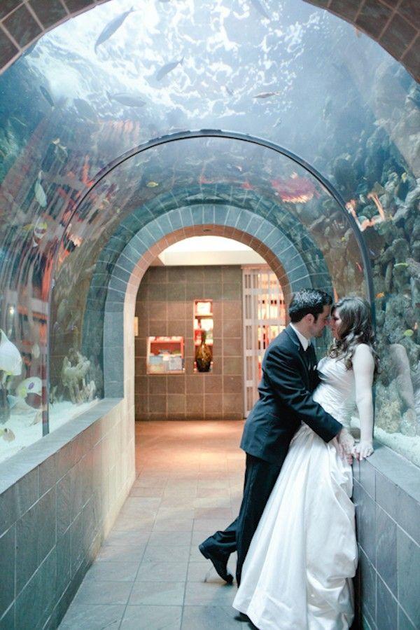 Best 25 Dallas Aquarium Ideas On Pinterest Dallas World