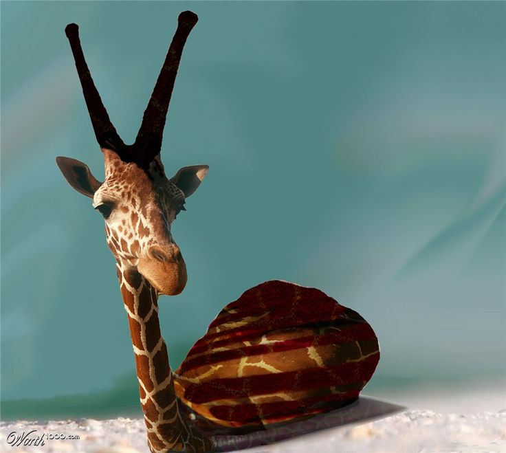 (2012-03) Giraffe + snail = girail?