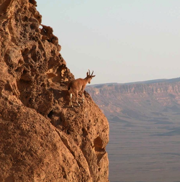 Lords of the Pinnacles Wild Goats of the World by Valdez Raul