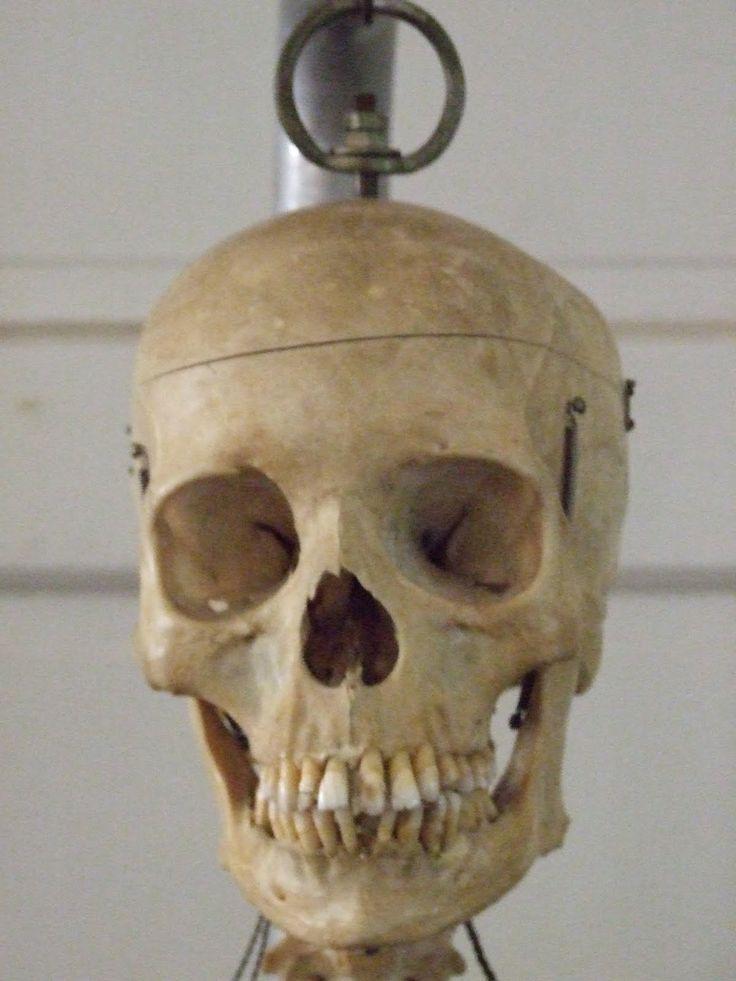 die besten 25+ skeleton for sale ideen nur auf pinterest, Skeleton