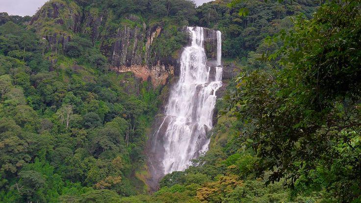 Mikumi National Park & Udzungwa Rain Forest Safari. http://bit.ly/tanzanasafaritours?utm_content=buffer46292&utm_medium=social&utm_source=pinterest.com&utm_campaign=buffer