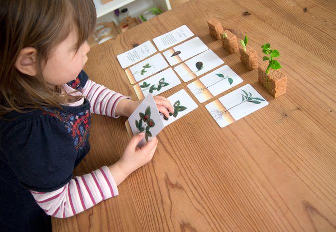 Cartes d'évolution d'une plante