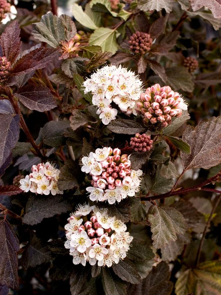 Discover flowering shrubs for shade and get growing tips to help them thrive from the experts at HGTV Gardens.