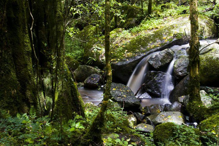 Hogsback Forest Stream
