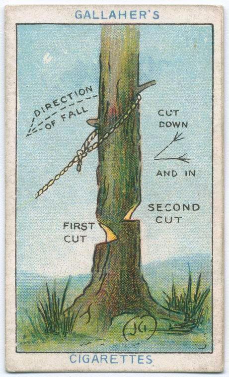 17 mejores ideas sobre abattre un arbre en pinterest. Black Bedroom Furniture Sets. Home Design Ideas