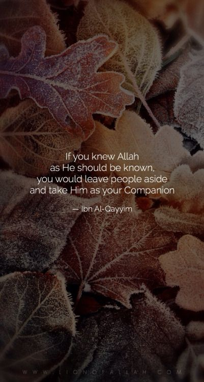 Allah is the best friend, because His Friendship will be beneficial, not only in this world but also in the Hereafter. How can one become the Friend of Allah Ta'aalaa? Who is the Friend of Allah? www.lionofAllah.com