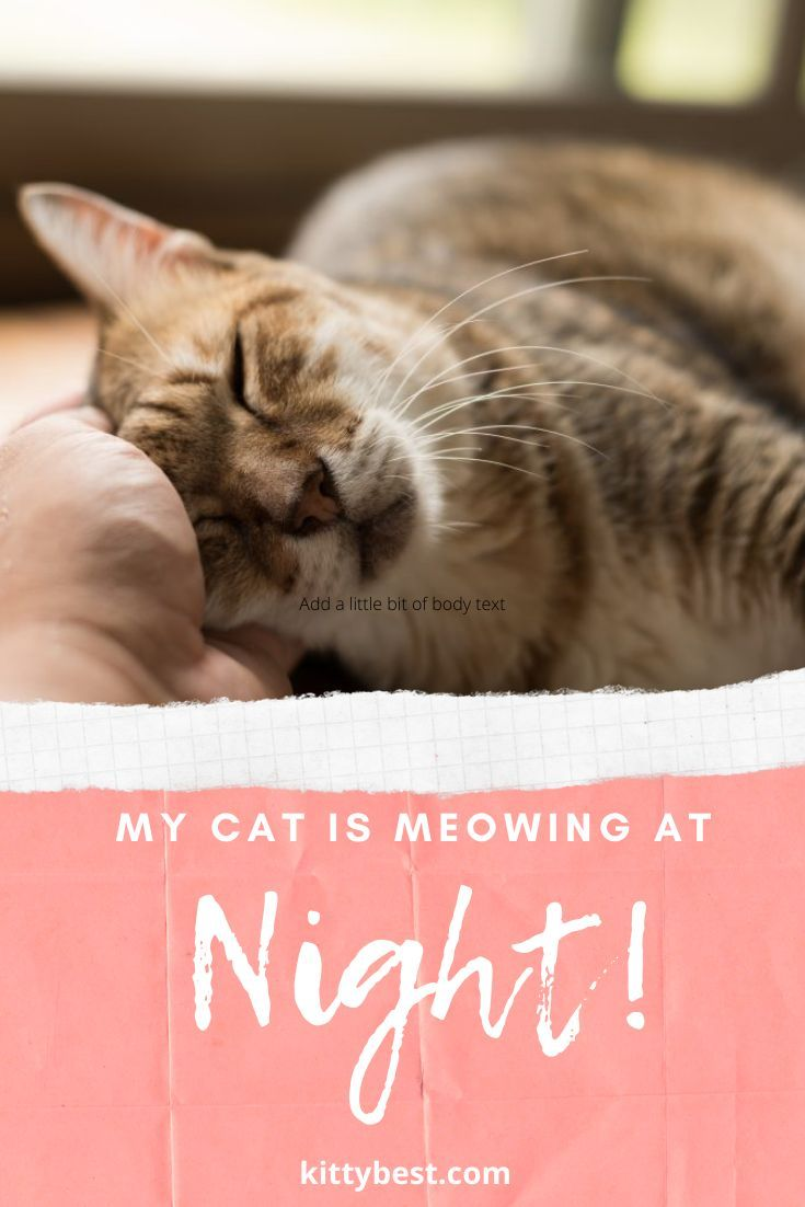 My Cat Is Meowing At Night Is This Normal Causes And Solutions Cat Meowing At Night Cats Cat Care
