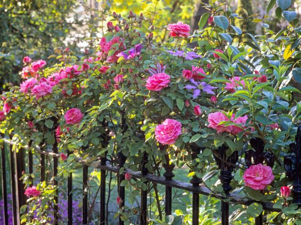 Perfect Rose Garden Design Tips | Hgtvgardens.com