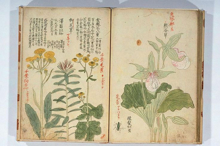 a journal of an unknown Japanese researcher and artist  The Illuminated Sketchbook of Stephan Schriber (1494) Selected pages from the Spätgotisches Musterbuch des Stephan Schriber, a manuscript which appears to be some kind of sketchbook, belonging to a 15th century monk working in South-West Germany, where ideas and layouts for illuminated manuscripts were tried out and skills developed.