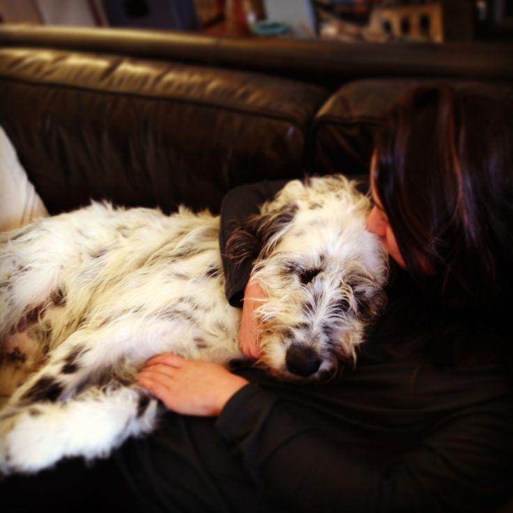 Dalmatian/ Irish Wolfhound Mix #dalmatian #irishwolfhound