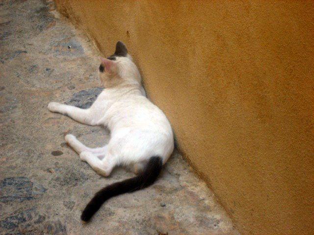 castle's cat