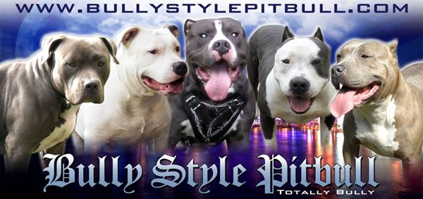 American Pit Bull Terrier Breeders and Kennels, American Pit Bull ...