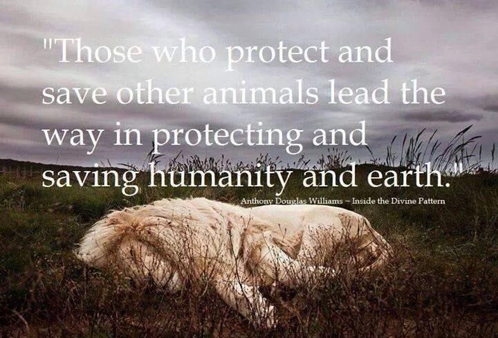 """""""If all the beasts were gone, men would die from a great loneliness of spirit, for whatever happens to the beasts also happens to man. All things are connected. Whatever befalls the Earth, befalls the sons of the Earth."""" ~Chief Seattle"""