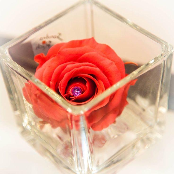 30% de réduction avec le code 30STAB du vendredi 14 au dimanche 16 mars 2014 minuit ! Valable sur toute la rubrique : Fleurs Naturelles Stabilisées sur www.artifleurs-fleurs-artificielles.com