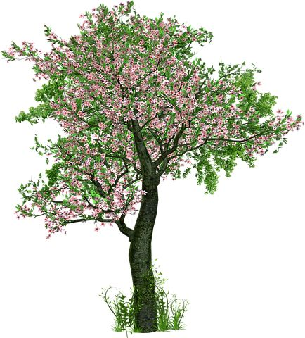 Árvore, Árvore De Folha Caduca
