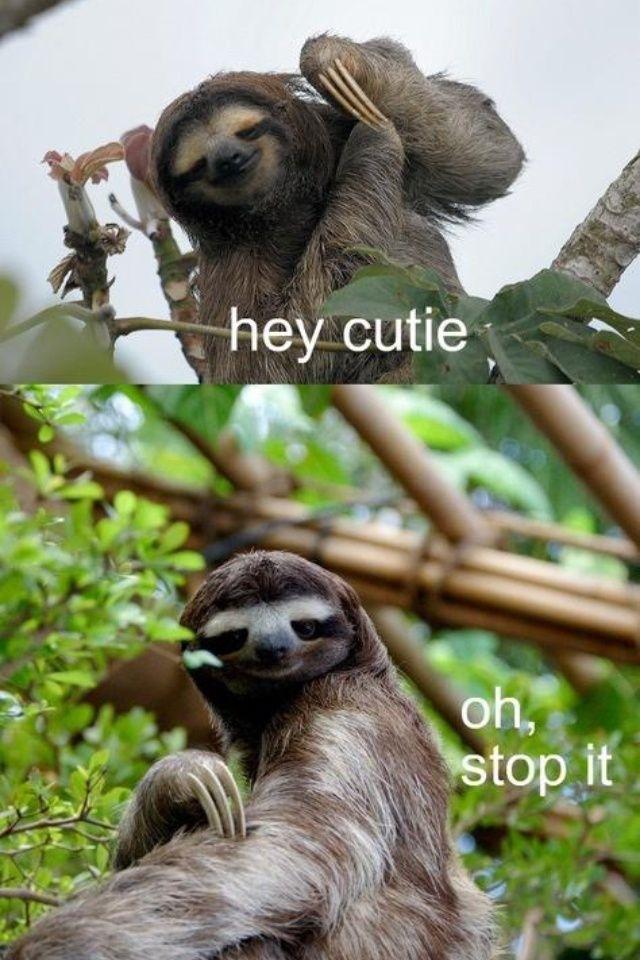 Best 25+ Sloth memes i...