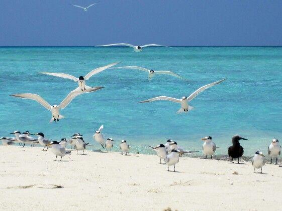 Uccelli foto Biasiolo Vincenzo