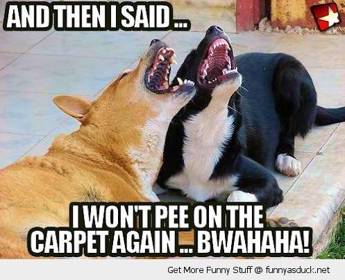 Funny Carpet 20 best flooring humor images on pinterest   funny animals, animal