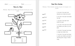 parts of a plant quiz 2nd grade science pinterest quizes plants and parts of a plant. Black Bedroom Furniture Sets. Home Design Ideas
