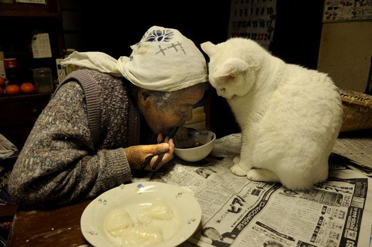 Miyoko Ihara has been taking photographs of her grandmother, Misao and her beloved cat Fukumaru since their relationship began in 2003. Their closeness has been captured through a series of lovely photographs. 11-18-12 / Miyoko Ihara