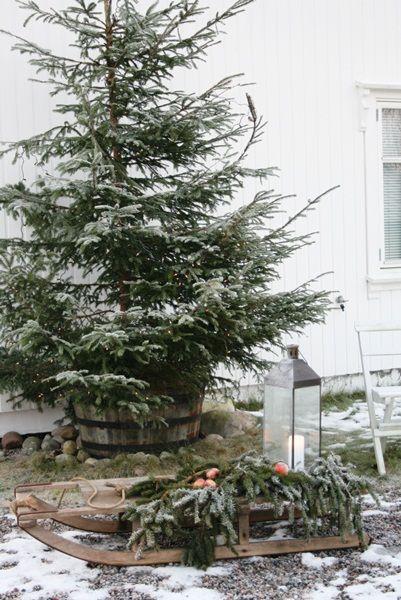 Christmas | Xmas | Jul | Noel. Outdoor Natural Decoration. Winter. Snow. Tree. Evergeen.