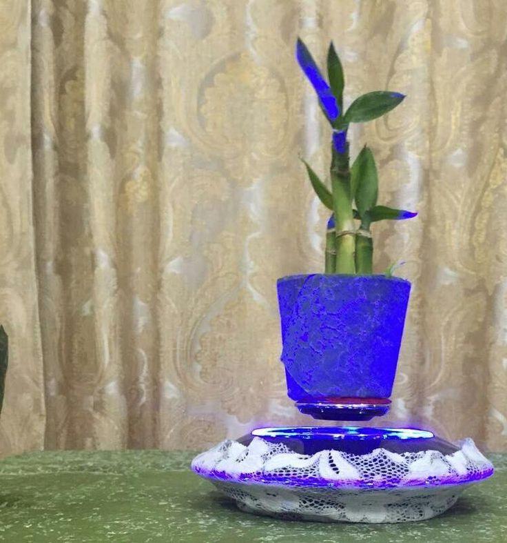 Air bonsai.