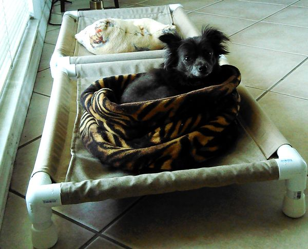PVC dog cots – I just added a new post with measurements for a small dog cot with the help of reader Donna