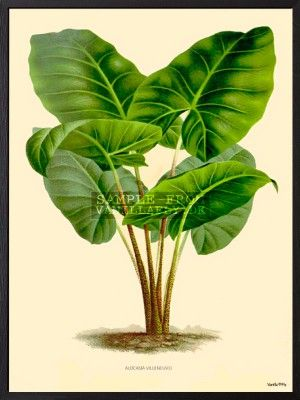POSTER GREEN PLANT (3-pack) #PSC118
