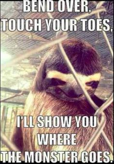 0887cace87dfb118889f351763c56bd2 sloth memes memes humor 56 best dirty sloth! images on pinterest sloth memes, creepy,Sloth Meme Images