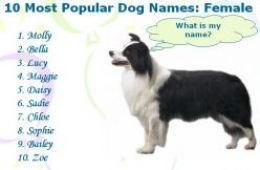 Most Popular Dog Names with Meaning (Male & Female Dog Names)