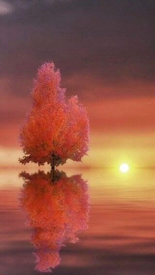 Stunning nature: Art in photographyPlease check out: http://TheThrillSociety.com It's wicked Thrilling!
