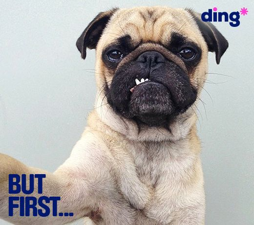 Feeling ruff today? Create a smile by topping-up someones day! www.ding.com