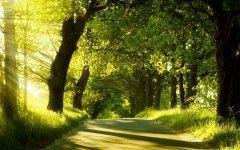 Nature Images Download Wallpaper