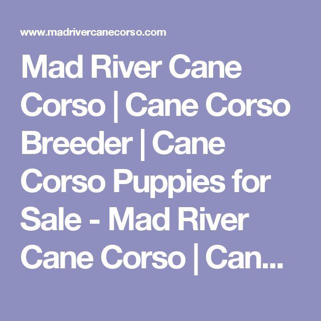 Mad River Cane Corso   Cane Corso Breeder   Cane Corso Puppies for Sale - Mad River Cane Corso   Cane Corso Breeder   Cane Corso Puppies for Sale