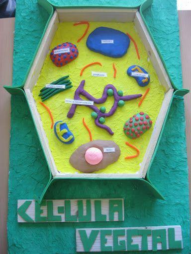 maqueta  CÈL·LULA VEGETAL http://molaimontau.blogspot.com.es/2013/03/maquetes-de-la-cellula.html